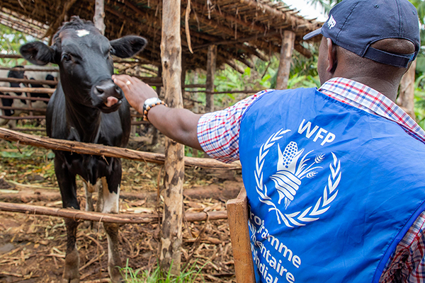 WFP participant petting a dairy cow